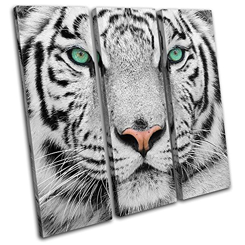 Bold Bloc Design - Siberian Tiger Eye Animals 120x120cm TREBLE Canvas Art Print Box Framed Picture Wall Hanging - Hand Made In The UK - Framed And Ready To Hang