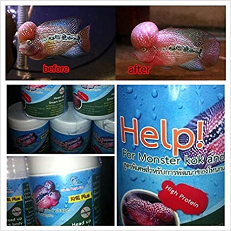 Amazon Com Cz Help For Monster Kok Flowerhorn Pet Supplies