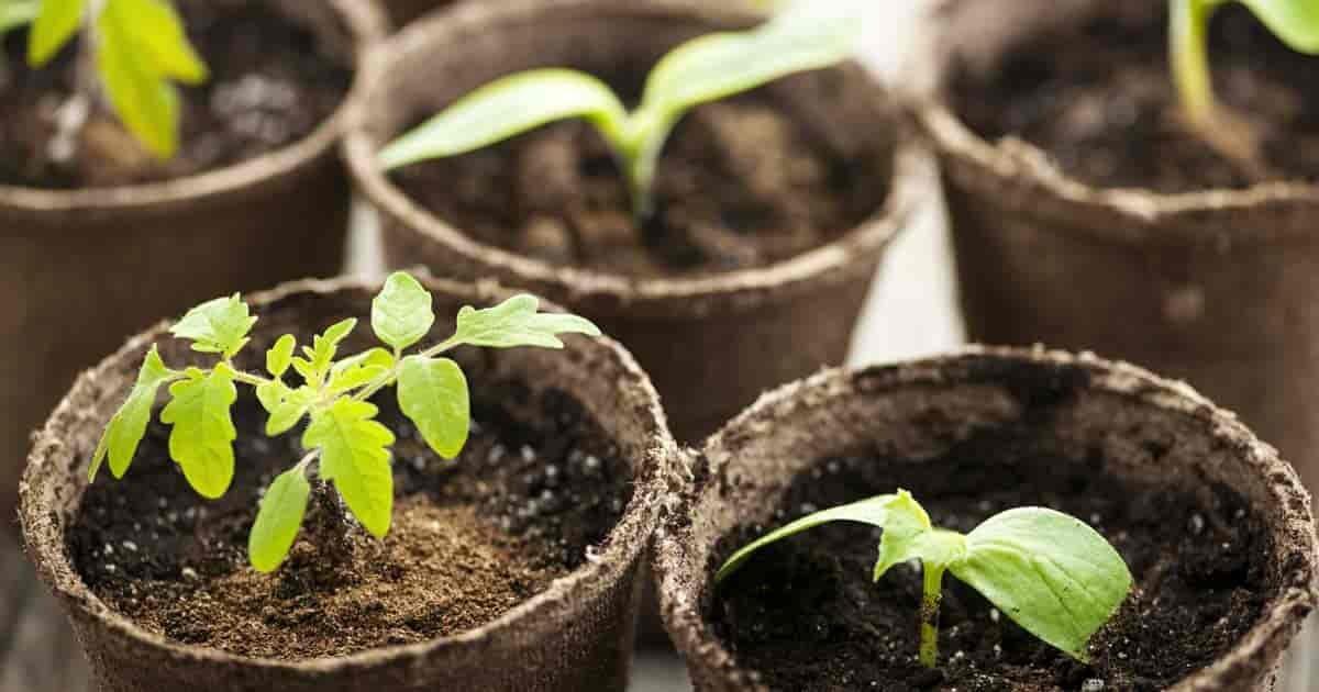 Plantable Coir Pot 6 – Set of 6