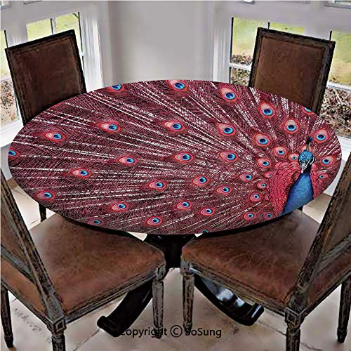 Elastic Edged Polyester Fitted Table Cover,A Beautiful Male Peacock Displays His Plumage Majestic Surreal Wildlife Theme Art,Fits up 40