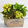 Infinity Flowers - Theshopstation Online Fresh Flowers Plants - Wedding Flowers - Birthday Flowers - Send Flowers - Flower Arrangements - Floral Arrangements - Plants Bouquets from Handmade local florist