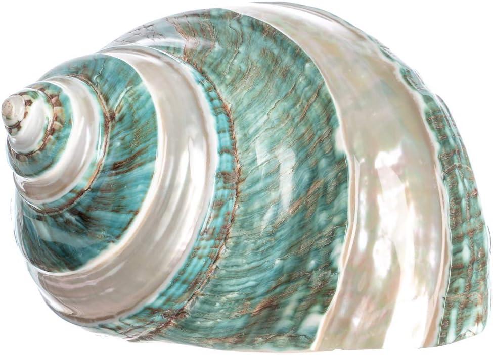 Hermit Crab Home Turbo Shell Jade Green Banded Turbo Shell 3 1//2 to 4 Plus Free Nautical eBook by Joseph Rains