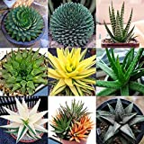 100Pcs Rare Herb Aloe Vera Seeds, Succulent Plants, Garden Bonsai, Meharbour