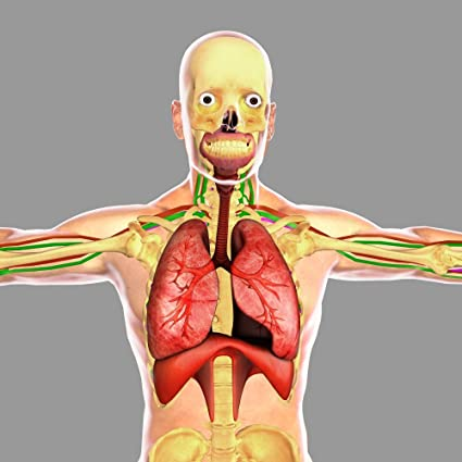 Amazon.com: Human respiratory system Poster Print (14 x 14): Posters ...