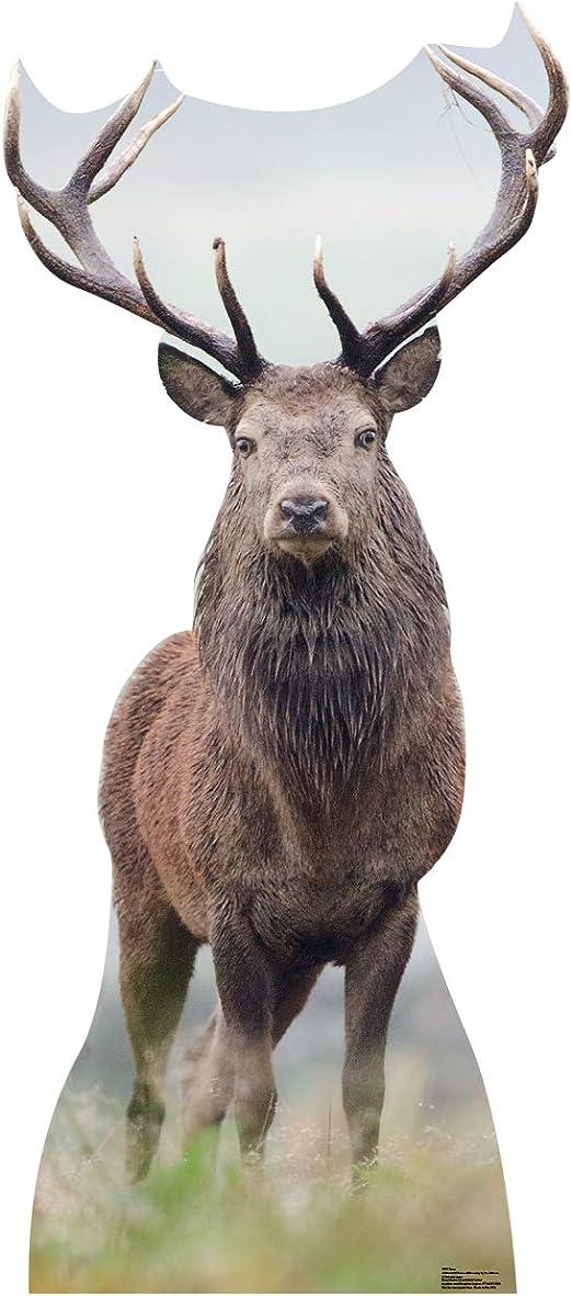 4 ft 11 in Elk Standee