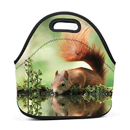 4401b54353c9 Amazon.com - SLBDBDMH Lunchbox Lunch Bag Squirrel Handbag ...
