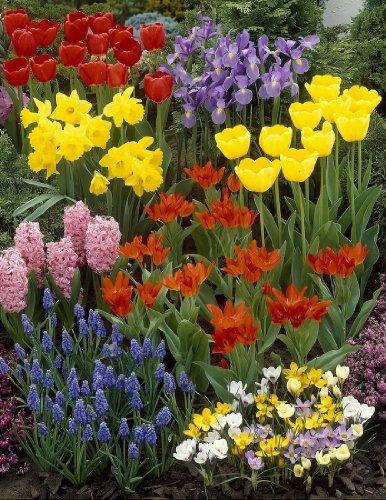 Sortiment 8 - 98 Blumenzwiebel Gartenpracht, Tulpen + Narzissen + Hyazinthen + Krokusse + Iris + Traubenhyazinthen