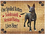 Spoiled Rotten Xoloitzcuintli Mexican Haireless Dog Puzzle with Photo Tin (252 pc.)