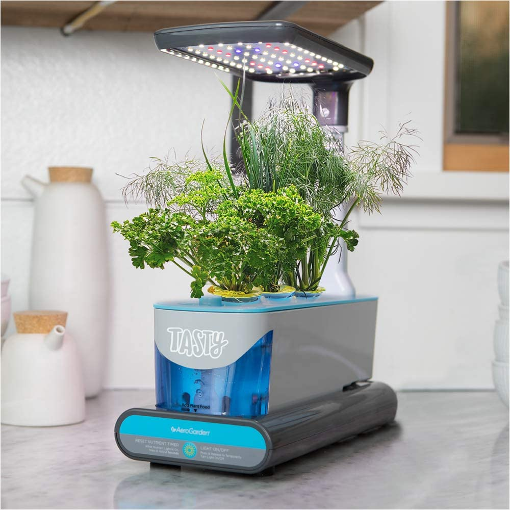 Tasty Sprout by AeroGarden, Plants and Herbs Fast Grower (with Ranch Seed kit)