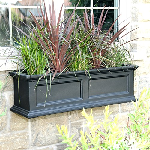 Buy flowers for window boxes