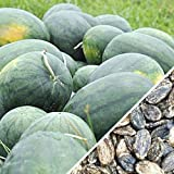 Florida Giant Watermelon Seeds, Huge Southern Heirloom Watermelon (12,800 Seeds)