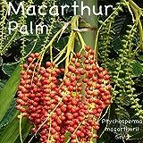 100 MacArthur Palm Ptychosperma Macarthurii Elegant Clumping Tree Fresh Seeds HD7