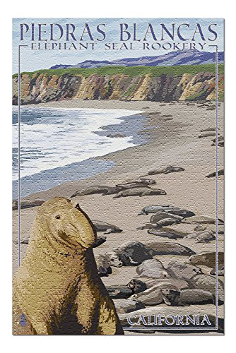 California - Piedras Blancas Elephant Seal Rookery (20x30 Premium 1000 Piece Jigsaw Puzzle, Made in USA!)