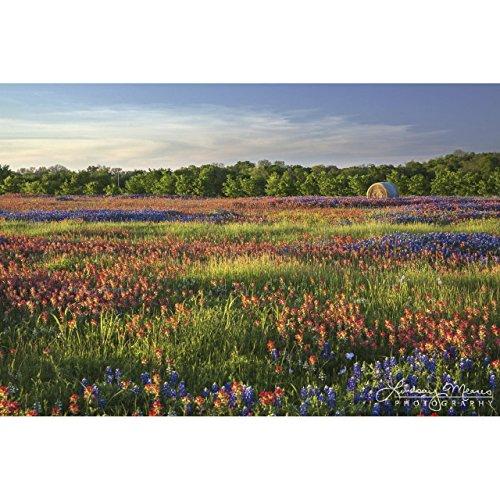 11x14 Wildflower Print,
