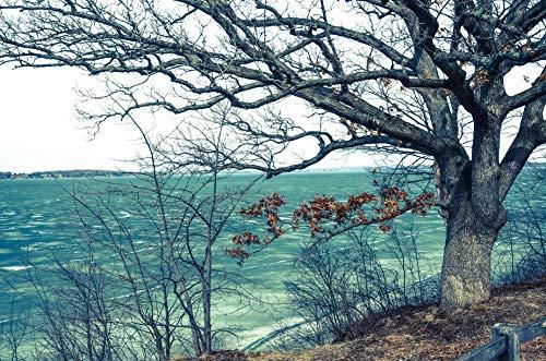 (Lake Mendota Frozen Spring)