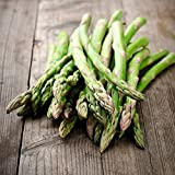 David's Garden Seeds Asparagus Mary Washington BA0021 (Green) 50 Non-GMO, Heirloom Seeds