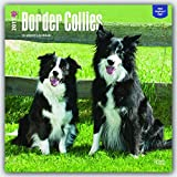 Border Collies 2017 Square 12x12 Wall Calendar