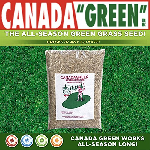 Canada Green Grass Lawn Seed - 12 Pounds by Canada Green (Image #3)
