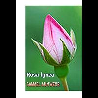 Rosa Ígnea ( Comentado )