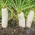 Outsidepride Daikon Radish Seed