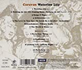 Waterloo Lily  - Caravan