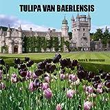 Tulipa Van Baerlensis, Naira Matevosyan, 1482752069