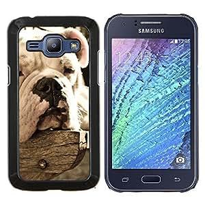 YiPhone /// Prima de resorte delgada de la cubierta del caso de Shell Armor - Bulldog Sleepy Dog Vignette verano - Samsung Galaxy J1 J100
