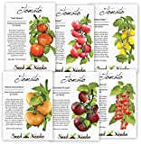 buy Multicolor Tomato Seed Packet Assortment (6 Individual Packets) Non-GMO Seeds by Seed Needs now, new 2018-2017 bestseller, review and Photo, best price $12.00