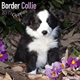 Border Collie Puppies Calendar - Only Dog Breed Border Collie Puppies Calendar - 2015 Wall calendars - Dog Calendars - Monthly Wall Calendar by Avonside
