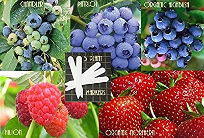 Bulk 3 Blueberry Seeds Survival Seeds 700 Seeds Upc 647923989762 + 5 Plant Markers