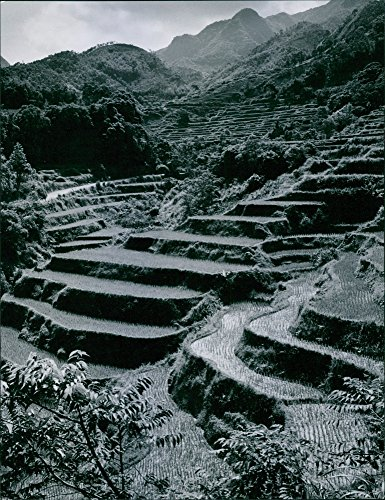 Vintage photo of Terraced rice field in Formosa. - Terraced Rice