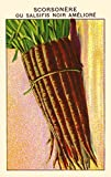 Black salsify Poster Print by unknown (24 x 36)