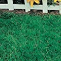 6lbs. Canada Green Grass Seed