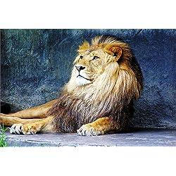 Startonight Wall Art Canvas Lion King, Animals Glow in the Dark, Dual View Surprise Artwork Modern Framed Ready to Hang Wall Art 23.62 X 35.43 Inch 100% Original Art Painting