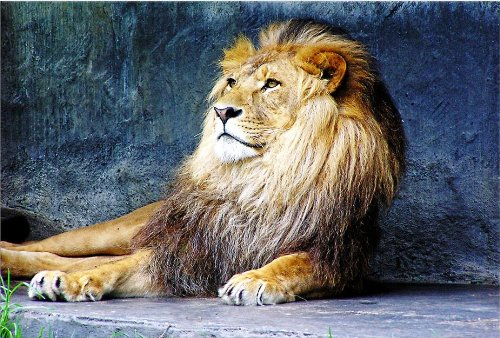 Startonight Canvas Wall Art Lion King,