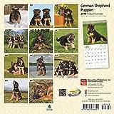 German Shepherd Puppies 2018 7 x 7 Inch Monthly Mini Wall Calendar, Animals Dog Breeds Puppies (Multilingual Edition)