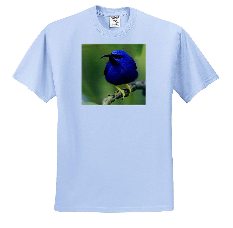 Purple Honeycreeper Birds 3dRose Danita Delimont ts/_313005 Adult T-Shirt XL