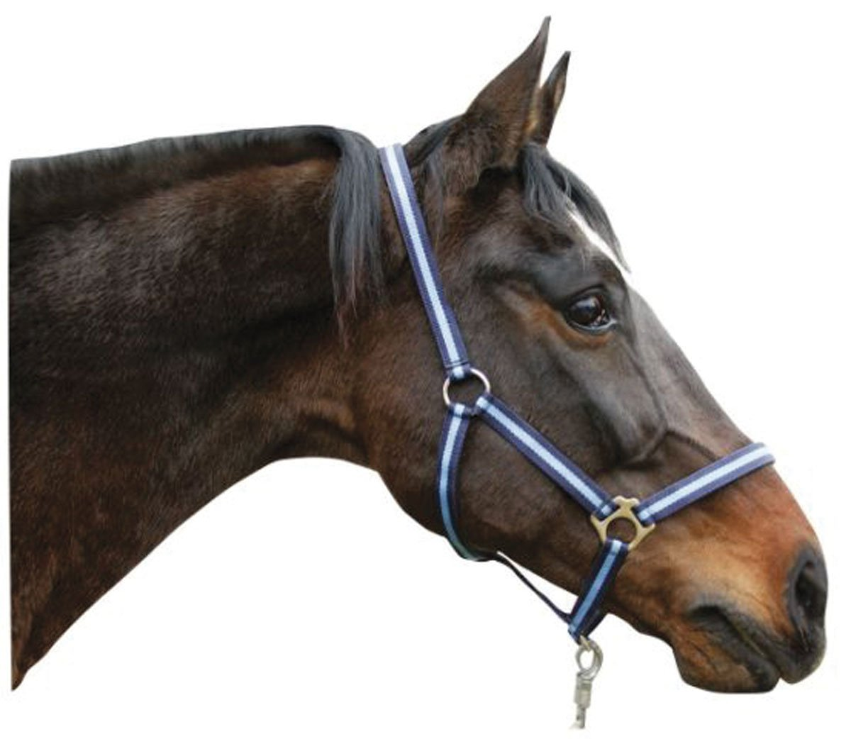 Nylon head-collar hippo navy light-bluee 3