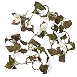 Factory Direct Craft Gold Glitter Trimmed Ivory Poinsettia Floral Garland for Indoor Holiday Decor