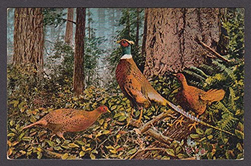 Pheasants in the Woods Oregon OR postcard 1910s
