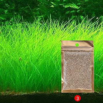 Aquarium Landscape Ornament Aquatic Plant Seeds Water Grass Mini Leaf Live  Plant Fish Tank Decoration Home