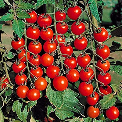 300 seeds- Greek Tomato Seeds Heirloom Sweet Gardening Seeds Plants Non Gmo Vegetable Seeds For Home Garden Planting Sent Gift : Garden & Outdoor