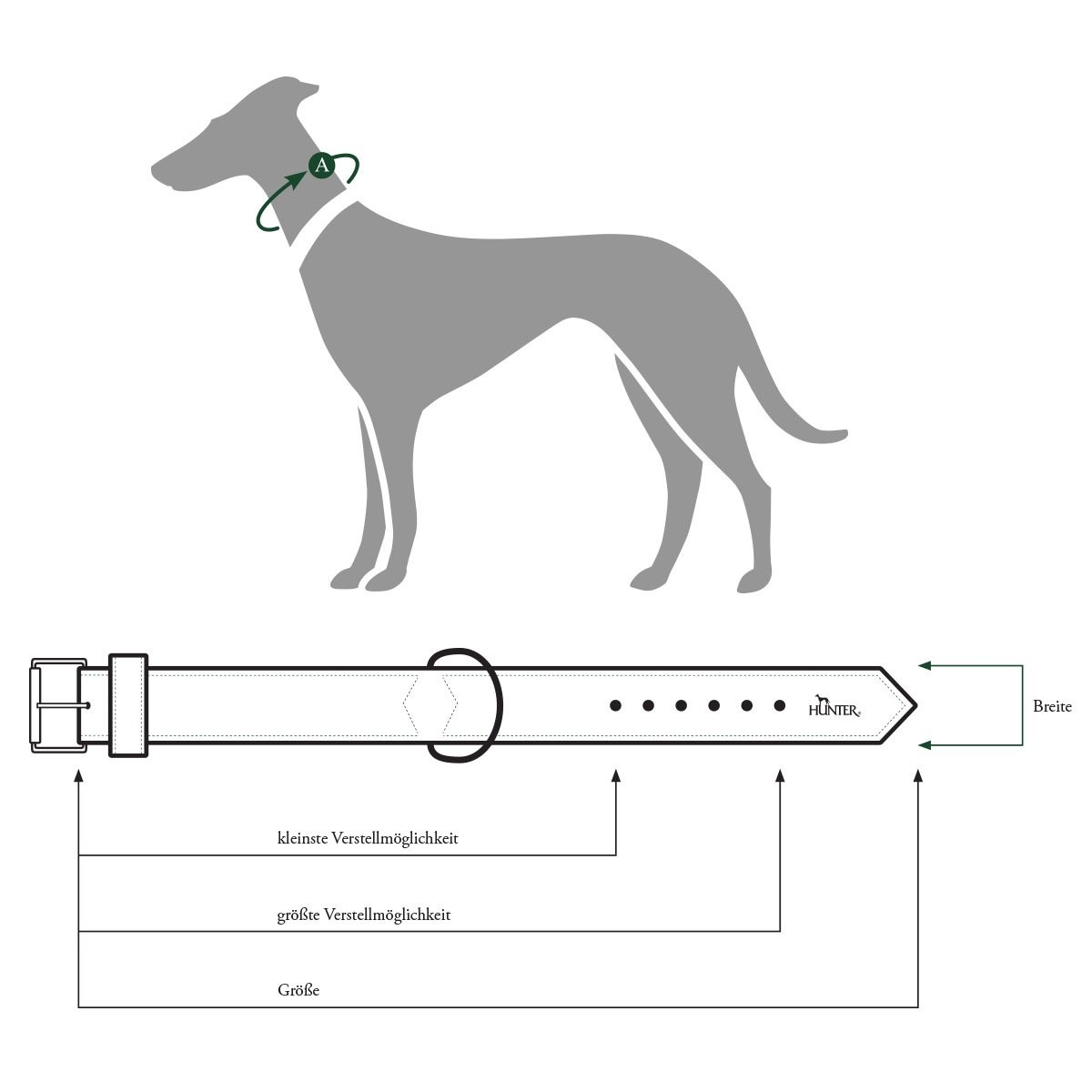 Collar de perro Hunter