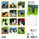 Border Collies 2019 12 x 12 Inch Monthly Square