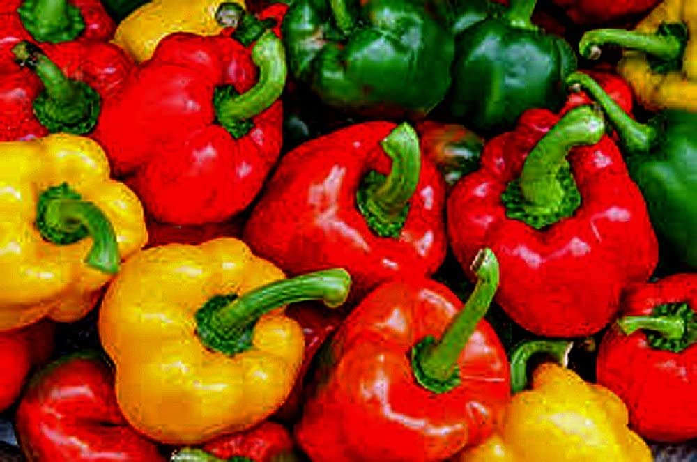 Bell Pepper, California Wonder Pepper Seeds, Heirloom, 25 Seeds, Delicious Large Peppers