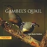 Gambel's Quail (Look West Series)