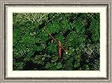 Framed Art Print 'Rainforest canopy research crane STRI, Panama' by Mark Moffett offers