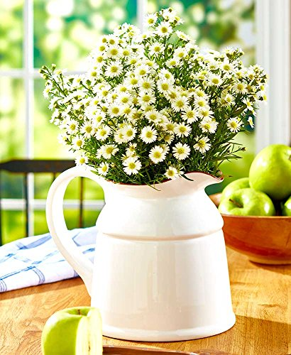 Farmhouse Ceramic Country Crock Vase. Planter Available in Red, White or Teal (White)
