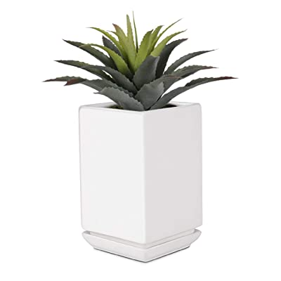 Flexzion Succulent Planter, Rectangular Ceramic Pot with Base Tray & Drainage Hole for Home Decoration, Ideal for Middle to Small Size Cactus Plant, 4 inch (White) : Garden & Outdoor
