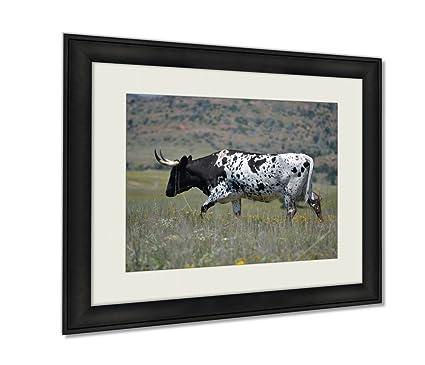 Amazon Com Ashley Framed Prints A Herd Of Longhorn Cattle Roam